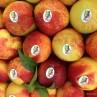 frutta a marchio
